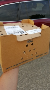 This is the box that the chicks were shipped in
